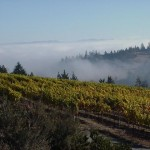 balistreri-vineyard-fog