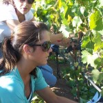 Working in the Vineyard: Wine Boot Camp