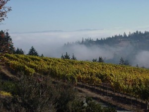 Hawk Hill Vineyard
